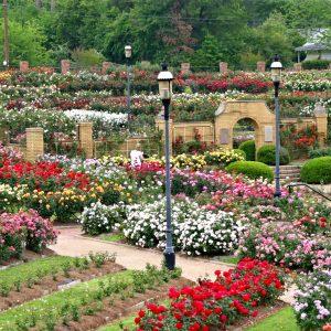 rose-garden-tyler-texas